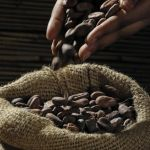 Benefits of Cacao Beans for Weight Loss