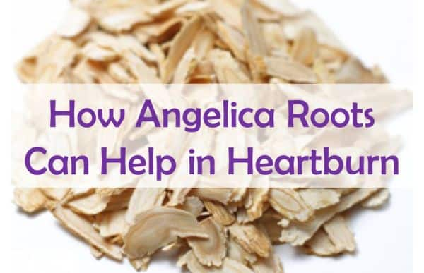 How Angelica Roots Can Help in Heartburn