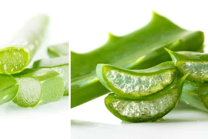 Why Aloe Vera is Great for Yeast Infections