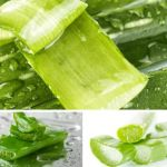 6 Ways Aloe Vera Benefits in Prostate Cancer
