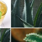Aloe vera Benefits In Acid Reflux & GERD