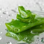 Aloe Vera Can Benefit in Gastritis