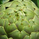 artichoke for heartburn
