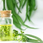 Best Eucalyptus Essential Oil